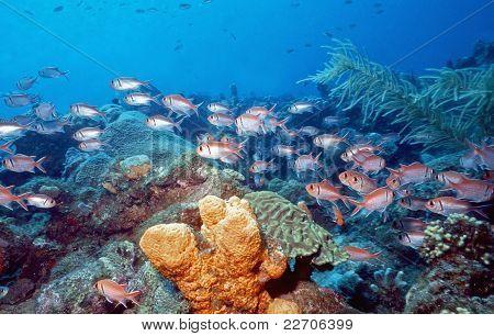 Caribbean Shallow Reef