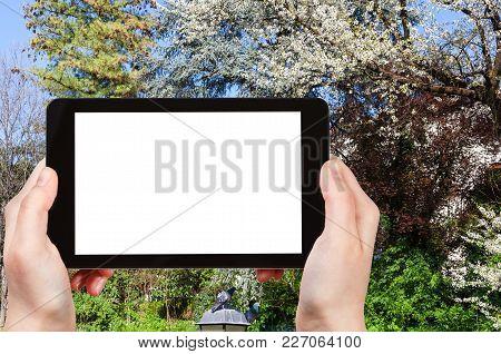 Travel Concept - Tourist Photographs Blossoming Trees In Urban Public Park Giardini Salvi (garden Of