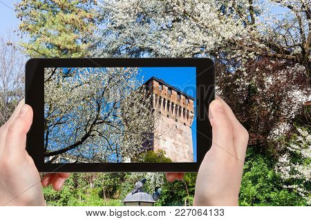 Travel Concept - Tourist Photographs Blossoming Tree And Tower Torrione Di Porta Castello In Urban P