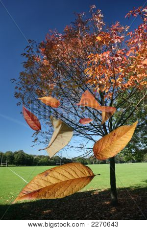 Falling Leaves Of Autumn And Fall