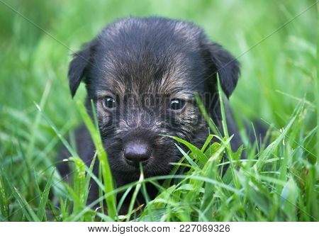 A Black Puppy Dog Playing In The Grass By Himself