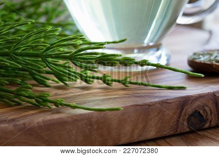 Fresh Horsetail Twigs On A Wooden Table, With A Cup Of Horsetail Tea In The Background