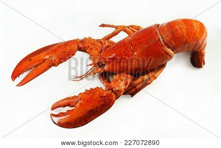 Fresh American Lobster, Whole Silhouette On A White Background