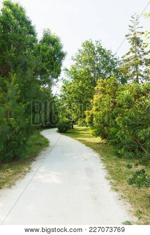 A Winding Walking Trail In A Park With Coniferous And Deciduous Trees. Cloudy Summer Day