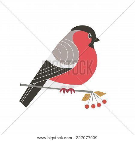 Cute Bullfinch Bird Icon. Freehand Cartoon Comic Style. Winter Birds Of Woodland, Backyard. Stylized