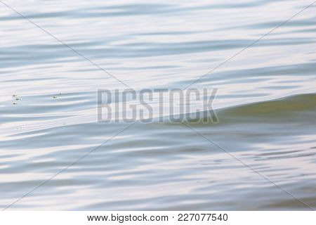 Abstract Water Surface . In The Park In Nature