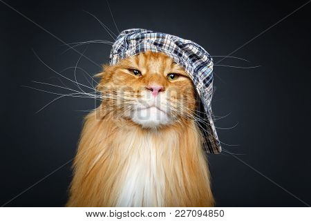 Beautiful Ginger Maine Coon Cat Wearing Checked Cap. Copy Space. Studio Shot On Dark Background.