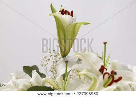 Flower bouquet background. Lily on gray.