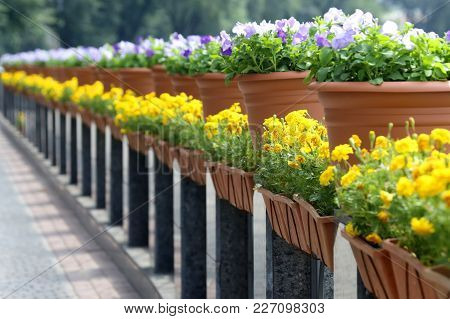 Decorative Flowers In Baskets Along The Marble Parapet