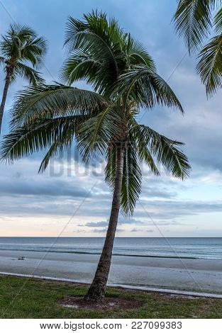 Palm Tree And Calm Morning Waters Along Gulf Of Mexico