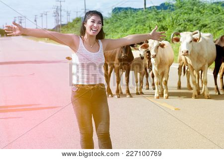 Pretty Young Asian  Woman Enjoy Summer Day After Work With Cow On A Road In Country Side Of Thailand