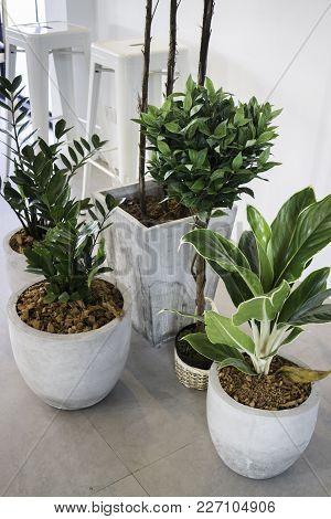 Succulent Plant Pots Decorated On The Floor, Stock Photo