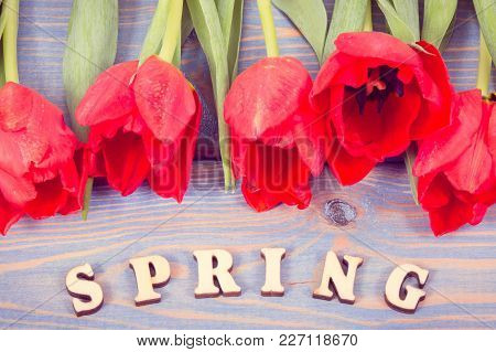 Vintage Photo, Word Spring With Fresh Red Tulips Lying On Blue Boards
