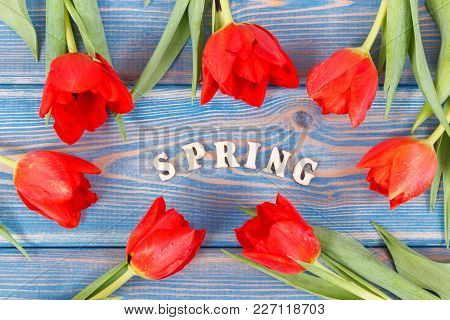 Fresh Red Tulips And Inscription Spring On Old Boards, Springtime Decoration