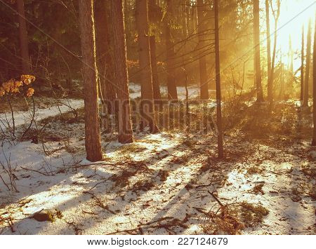 View Of A Winter Forest, Southern Bohemia, Czech Republic