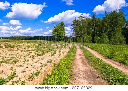 Summer Countryside Landscape. Deserted Rural Dirt Road Along The Forest, Moscow Suburbs, Russia.