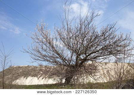 Blooming Tree Near The Limestone Quarry With Blue Sky As A Background. There Is Early Spring On This