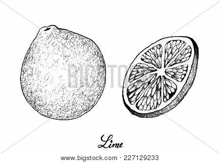 Tropical Fruits, Illustration Of Hand Drawn Sketch Fresh And Ripe Limes With Juicy Slice Of Limes Is