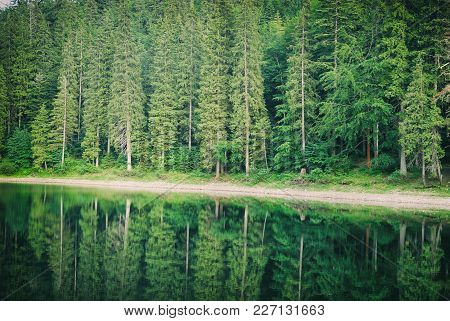 Coniferous Fir Forest And Lake Mirror Reflection Wild Woods Landscape Moody Weather