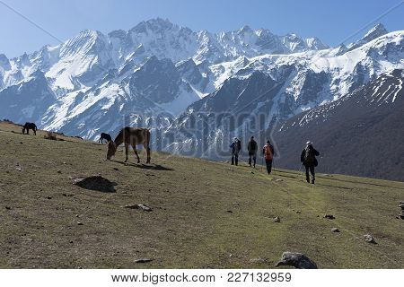 Backpackers And Horses In Nepal Climbing Muntains