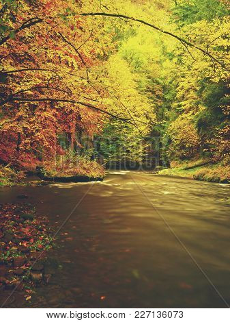 Walk Among Colorful Fall Woods And Mountain River  In Nature Reserve. Autumn Forest Reflected In Wat