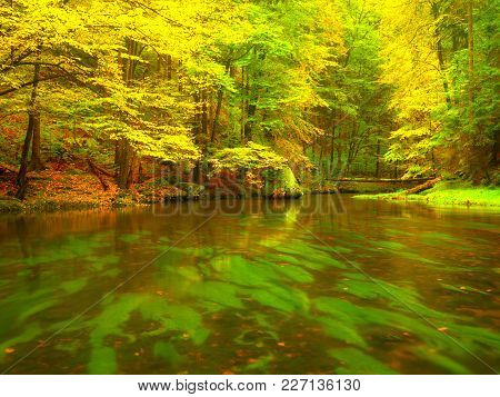 Autumn Stream In Red Wood At Rainy Day. Autumn Creek In  Beech Forest.