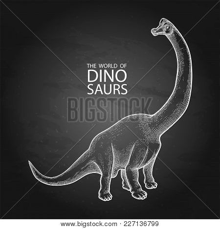 Graphic Brachiosaurus. Vector Dinosaur Isolated On The Chalkboard. Herbivore Animal Of The Prehistor