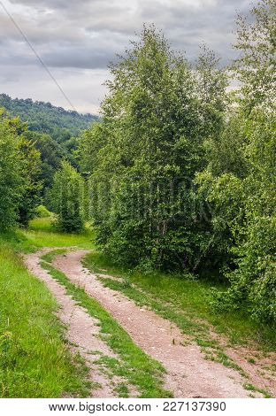 Forest Road Among Tall Trees With Green Foliage. Beautiful Nature Scenery In Summer