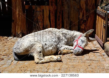 A White Donkey Sleeping In A Small Corral In The Monchique Mountains, Algarve, Portugal, Europe.