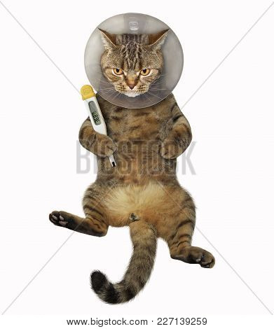 The Cat Is Wearing A Protective Veterinary Collar. It Holds A Thermometer.