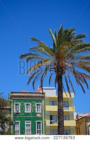 Palm Tree With Traditional Portuguese Buildings To The Rear In The Old Town, Portimao, Algarve, Port