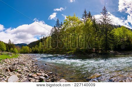Forest River In Mountains. Lovely Springtime Countryside Scenery