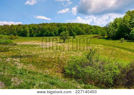 Grassy Glade On Hill Among The Forest. Lovely Nature Scenery Under The Clouds On A Blue Sky In Sprin