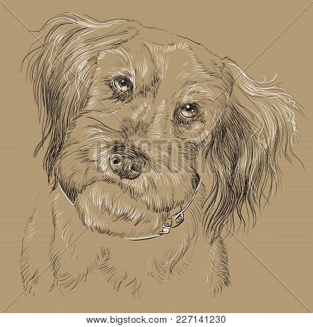Fluffy Mongrel Dog Vector Hand Drawing Black And White Illustration Isolated On Beige Background