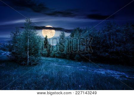 Path Through Forested Grassy Meadow At Night In Full Moon Light. Beautiful Summer Nature Scenery