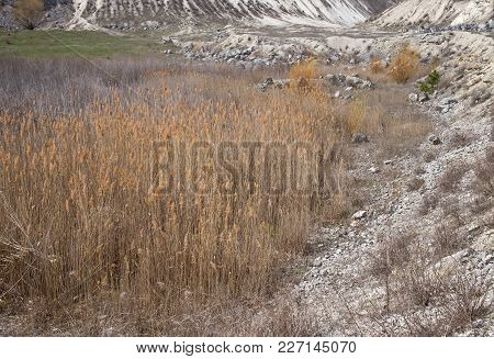 Dry Reeds Growing In Limestone Quarry. Can Be Used As Wallpaper For A Monitor.