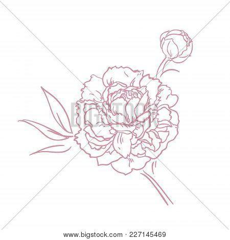 Beautiful Peony Bouquet Design Onwhite Background. Hand Drawn Vector Illustration.