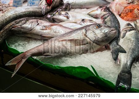 Raw Fresh Fish (gilt-head Bream Or Dorada) For Sale In The Fish Market