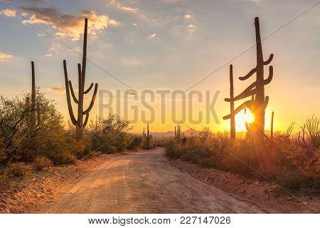 Travel To Arizona Desert At Sunset With Saguaro Cacti In Sonoran Desert Near Phoenix.