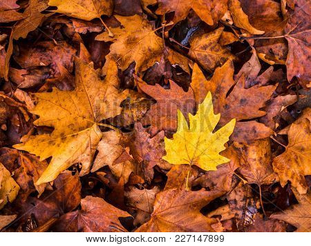 Yellow Leaves In Autumn On The Ground