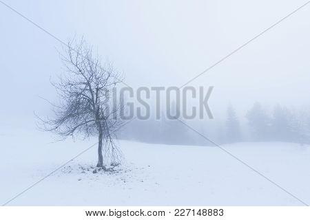 Single Dead Tree At Spooky Misty Day In Winter. Mountain Tara, Serbia.