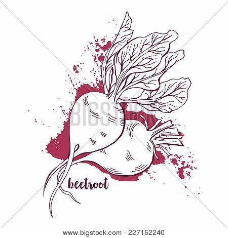 Beetroots Watercolor. Hand Drawn Vegetables On White Background. Painted Beet Roots With Leaves. Abs