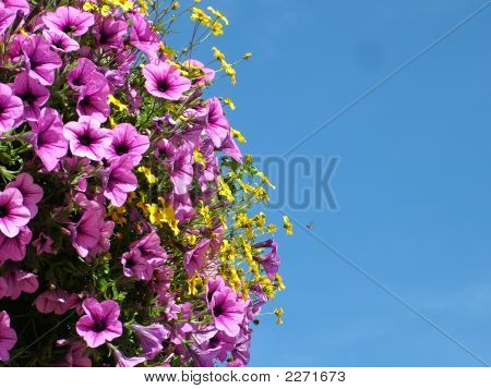 Flowers And Wasp