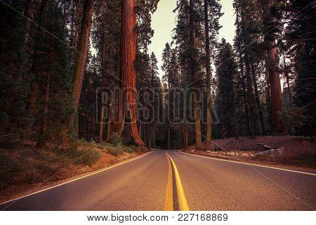 California Sierra Nevada Road. Giant Sequoias National Park. United States Of America.