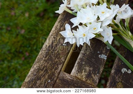 White Narcissi Flowers On A Wooden Garden Seat