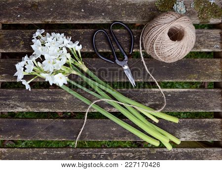 Ball Of Twine And Scissors With Bunch Of White Narcissi