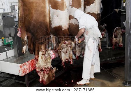 Slaughterhouse Workers In A Meat Factory, Meat Processing Facilities