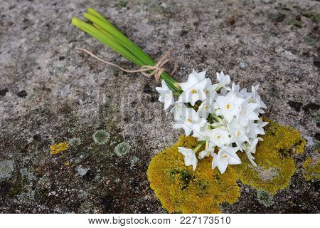 Narcissi Tied With Twine, Lying On A Stone Bench