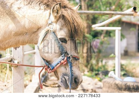 Beautiful Horses In The Stable, Portrait Of A Horse With Copy Space And Text