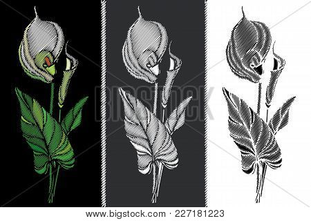 Vector Set With Embroidery Calla Flower In Pastel Yellow, Black And White, Bud And Leaves Isolated.